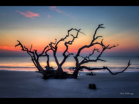 Driftwood Beach Walk Talk Jekyll