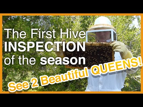 Beginning Beekeeping: First Inspection - Beautiful Queens! - GSB S1 E3