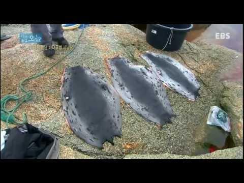 다큐 오늘 - 나르사끄에서 만난 바다표범 사냥꾼