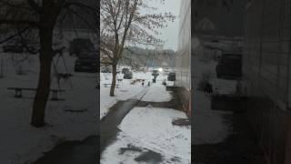 Собаки атаковали серпуховский район п.мирный...а главы говорят щенят не трогать..на улицу страшно вы