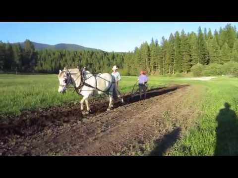 Doc, Barbara, and Solven plowing with single horse drawn plow