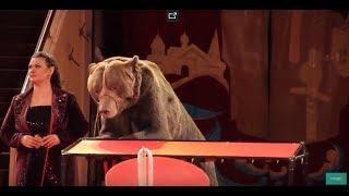 """Новая цирковая программа """"Звёзды манежа"""" в Ярославле. Конный аттракцион """"Кубанские казаки"""""""