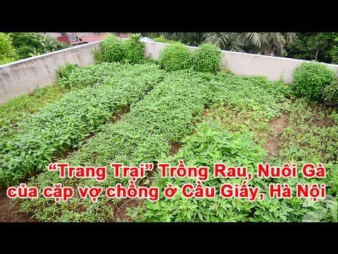 """""""Trang Trại"""" Trồng Rau, Nuôi Gà giữa lưng trời của cặp vợ chồng ở Cầu Giấy, Hà Nội"""