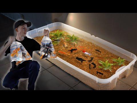 Rescuing all  Walmart goldfish - fish abuse?