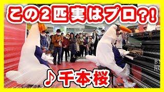 【ピアノドッキリ】街中で突然、千本桜と春よ来い弾いてみた《きぐるみ母さん #102》street piano performance by Japanese chicken thumbnail