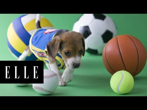 2016 Puppy Bowl Lineup | ELLE