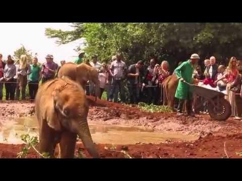 Elephant Orphanage, Kenya Africa