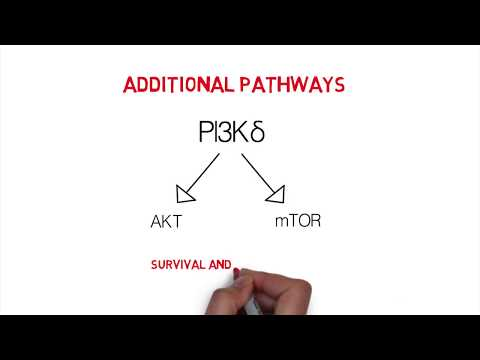 CLL Whiteboard #1: Introduction & Mechanisms of Action of BCR Signaling Inhibitors