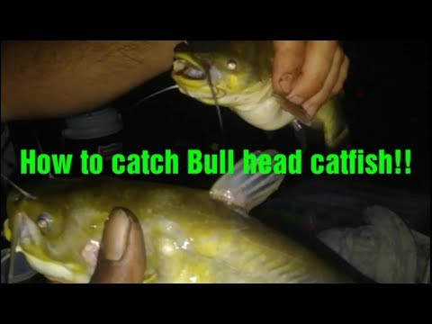 How To Catch Bullhead Catfish!! Rigs, Tips And Techniques