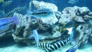 Океанариум в Харькове - часть 2