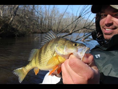 How To Fish For Yellow Perch During The Spring Perch Run