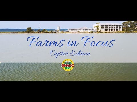Farms in Focus: Oyster Edition