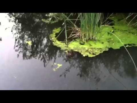 Cordelia Beavers