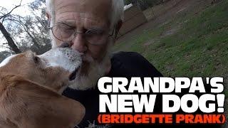 GRANDPA'S NEW DOG!! (BRIDGETTE PRANK!)