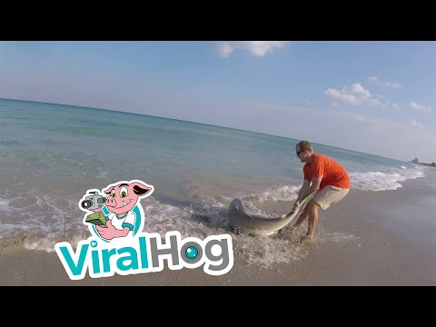 Man Rescues Shark from Fishing Line || ViralHog