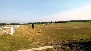 Na łące konie z Makowicy💖