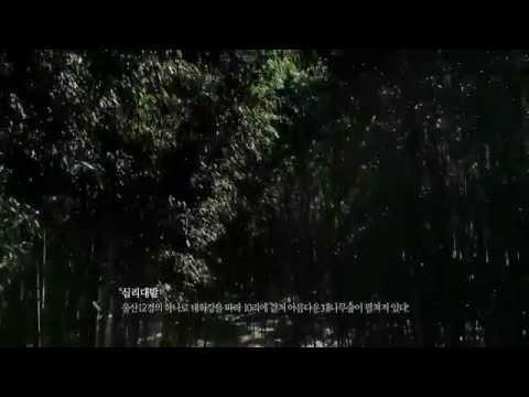 울산시(Ulsan) l 울산 십리대밭 광고(TV-CF)