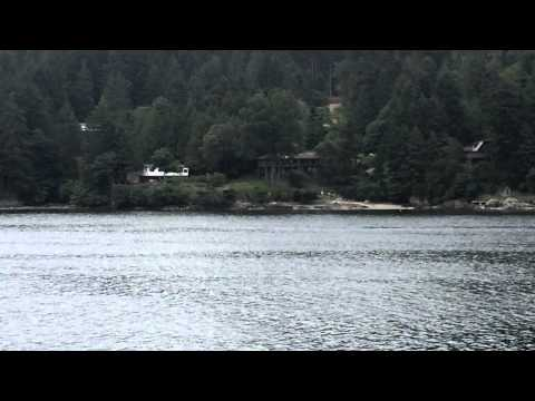 Salt Spring Island - Orca Pod in Fulford Harbour Ferry View