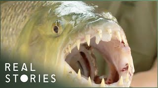 Hunting the Legendary Nile Perch (River Monster Documentary) | Real Stories