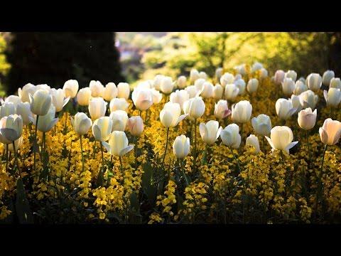 ☼ Happy Springtime to Everyone ☼  - 4k