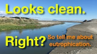 Water Eutrophication in New Zealand
