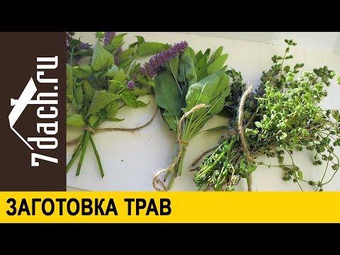 Травник - справочник лекарственных растений — Нармед