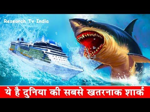 Megalodon दुनिया की सबसे बड़ी शार्क| Megalodon: The Monster Shark | Megalodon Sharks still lives