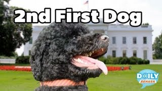 Newest Obama - Sunny the Dog | DAILY REHASH | Ora TV