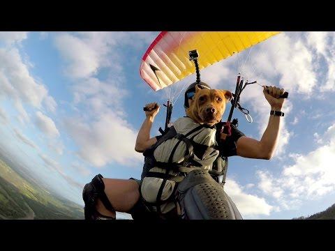 Собака-парашютистка