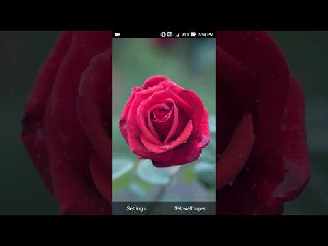 Rose Live Wallpapers Apps On Google Play