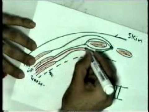 07 Nerve Supply & Vessel