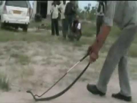 Sujangarh Snake master TAAL CHHAPAR