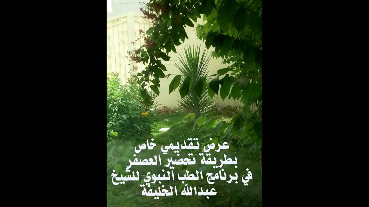 طريقة تحضير العصفر في برنامج الطب النبوي للشيخ عبدالله الخليفة Youtube