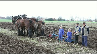 Gambar cover Mother, Daughter & 3 Draft Horses Ploughing a Field