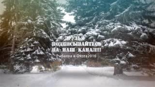 Охота на Лося с Лайками видео Рыбалка и Охота 2016