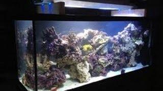 New Custom Reef Tank Revealed