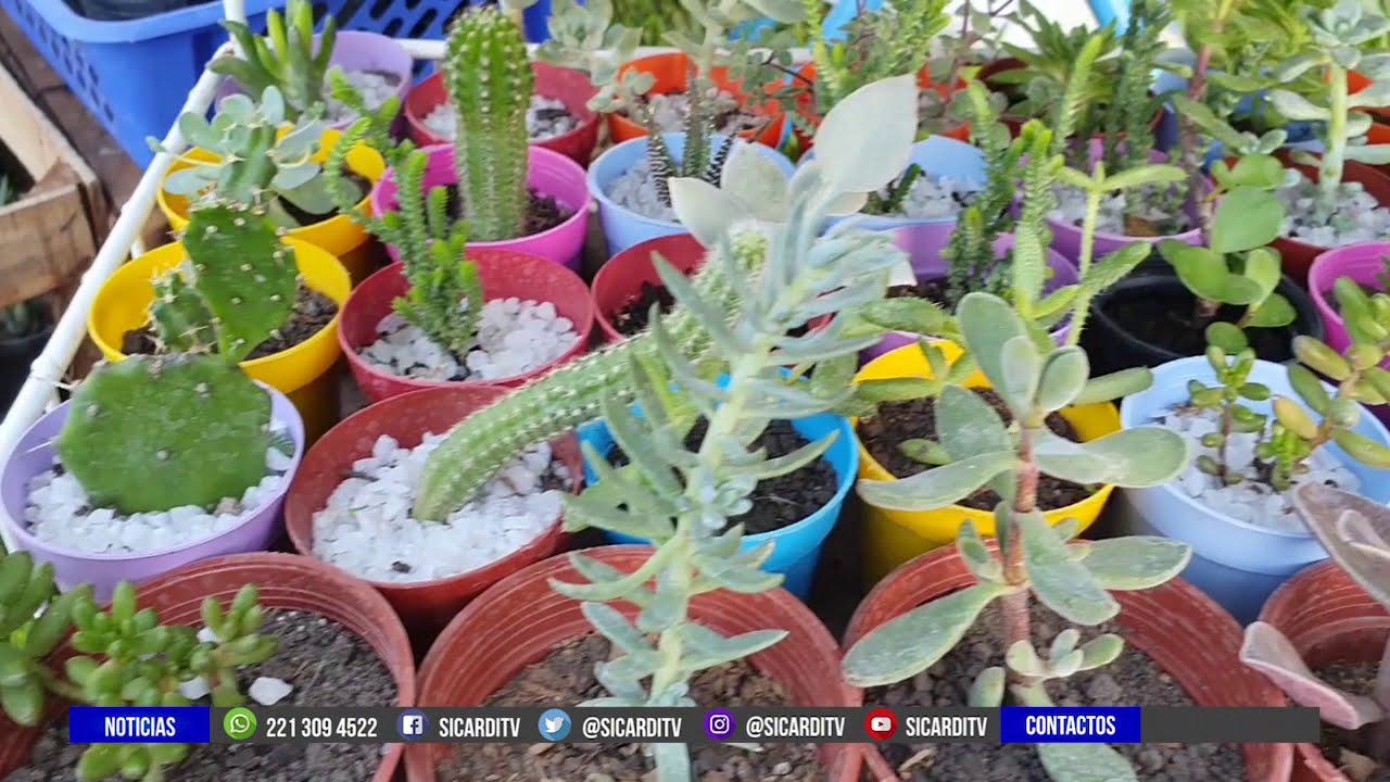 MICRO EMPRENDEDORES: Hoy, el Valle de los Cactus