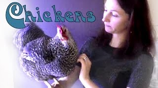 Chickens As Pets: Training Tips and Tricks