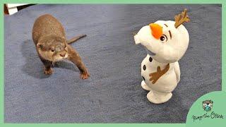 カワウソビンゴとベルに全くハマらないおもちゃ達|Toys that otter Bingo&Belle does not interested at all