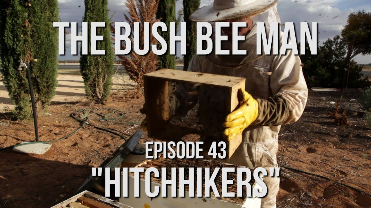 """Transferring Bees from Bee Vacuum into a New Hive - Episode 43: """"Hitchhikers"""""""