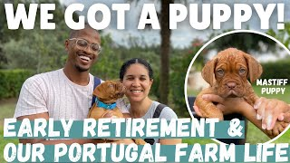 We Got A Puppy In Portugal | Starting Our Portugal Farm Life in Early Retirement