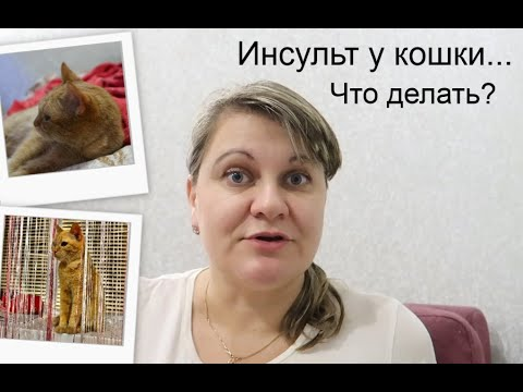Инсульт у кошки.Что делать?/Как мы лечили кошку.