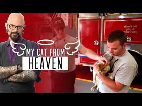 Meet Flame, the Firehouse Cat!