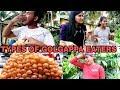 Types Of Golgappa Eaters   Prince Ka Pitara MP3