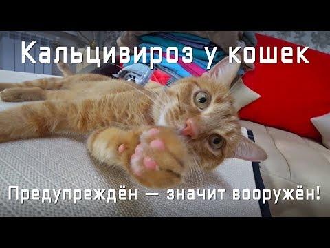У кошки болят лапы признаки