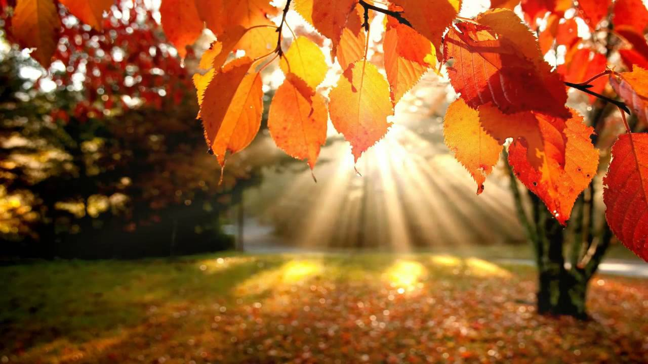 Desktop Wallpaper Fall Leaves 1 Hour Of Warm Relaxation Music Best Relaxing Songs For