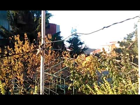 Video Girato in WVGA Con Archos 40 Cesium - MobileOS.it