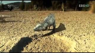 한반도의 공룡1 dinosaurus_tarobosaurus_tynnranosaurus kids.mp4