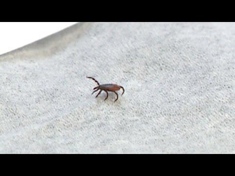 Dangerous tick-borne viruses on the rise