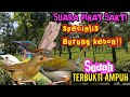 Suara Pikat Burung Specialis Burung Kebon  Mp3 - Mp4 Download
